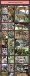 Feline Comparison: Huge by sindos