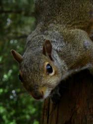 Squirrel investigation by kez245