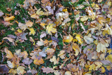 Leaves 1 by moonhare77