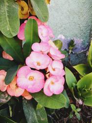 Pretty Flowers by Athenea81