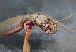 Sketchy insect by In2Eternity