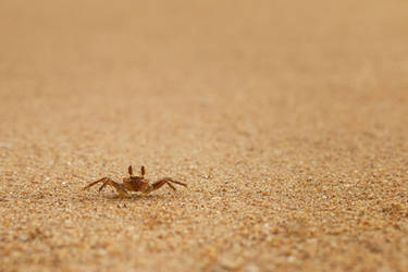 tiny crab by FrlMahlzeit