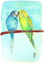 Budgie Love by sunnyfiny
