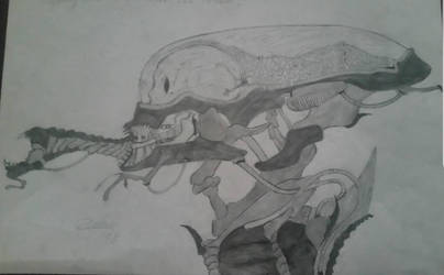 next generation xenomorph drone/ assasin by TheDubstepAddict