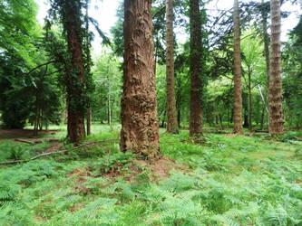 New Forest 2012 27 by LadyxBoleyn