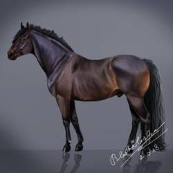 El Marron - Howrse - Black Pearl by Bleskobleska-Yandere