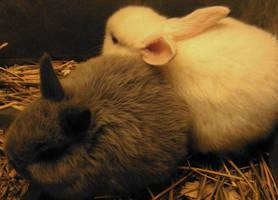 bunnies by vladmacaru