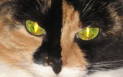 the kitten by sydneysiders
