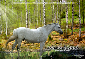 warmblood in forest by stacybarnes