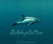 Dolphyntattoo's Profile Picture