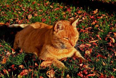 Autumn Sun by Rotschweif