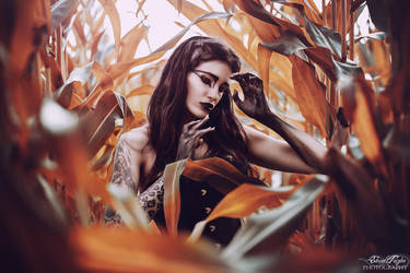 Raven by xXEliskaXx