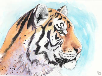 Watercolor tiger (again) by petrunsig