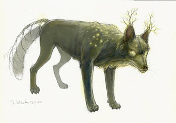 Shining Wolf by StephanieStutz