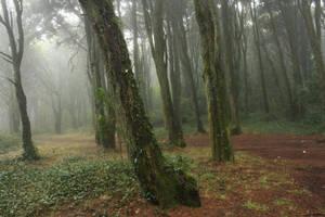 Forest 3 by huginswarrior