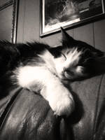 sleepy time kitty by darkangelpixie