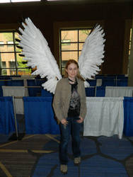 Wings Zenkaikon 2018 by bumac