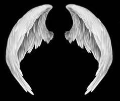 wings by RomanticFae