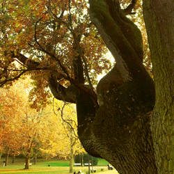 TREE 29 by photographiclady