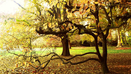 Tree 30 by photographiclady