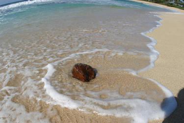 LS - Beach Coconut 021905-0181 by leialohastock