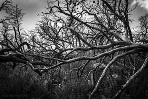 Black Forest XVIII by lonelywolf9999