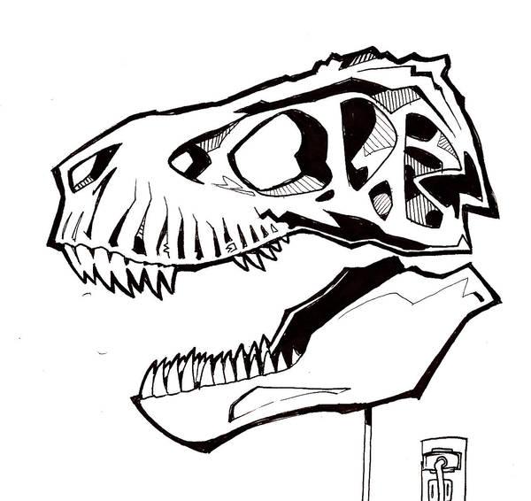 Pig Skull Diagram
