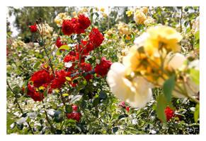Summer flowers for friends by DanStefan