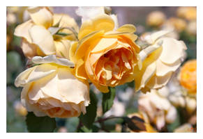 Flowers for Soul by DanStefan