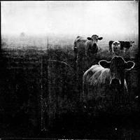 musique blanche by laflaneuse