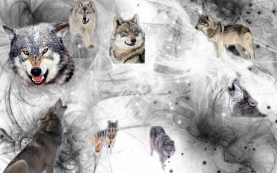 Wolf Background by underestimatedbeauty