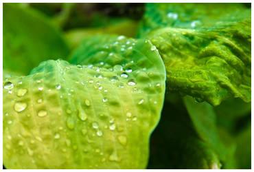 stay green::: by TheLoneGunmen