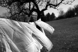 Sheets In Wind by RudiP