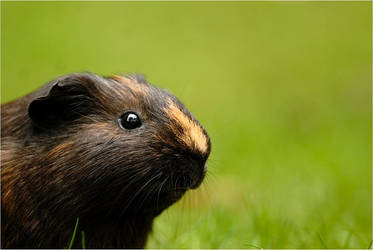 .. spring spring like all the guineapigs that sing by x-crossroad