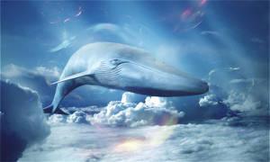 whale by BONBON-O