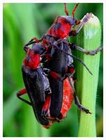 bugs by ElenaAlex