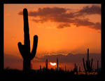Another Saguaro Setting Sun by RooCat