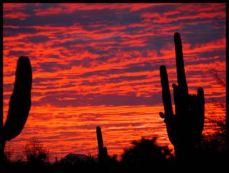 FireWater Saguaro Sunset Sky by RooCat