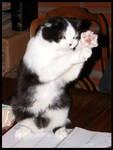 Kross Kung Fu Kitty by RooCat