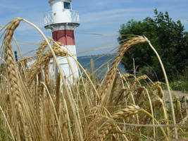 Lighthouse in wheat by nicolahu
