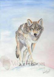 Untitled by wolfmoonie