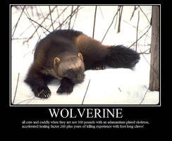 Wolverine by mecca6801
