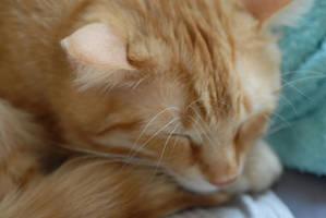 Garfield: sleeping by Fleshgrinder