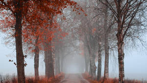 Fantasy avenue by Patrick-fj
