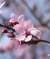 spring by alina-ay