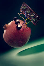 Untitled with pomegranate by seenew