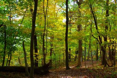Through the Trees by Earthfeeler