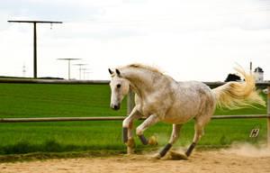 Horse by OnkelMario