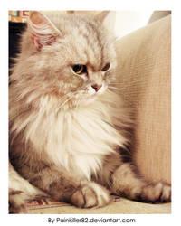 My Kitten by Painkiller82