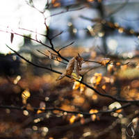 Winter leaves by Musterkatze